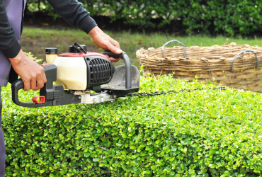 Pruning and Shrubbery